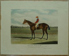 Aquatinta,Pferderennen, R.G.Reeves, Engraving Horse racing,